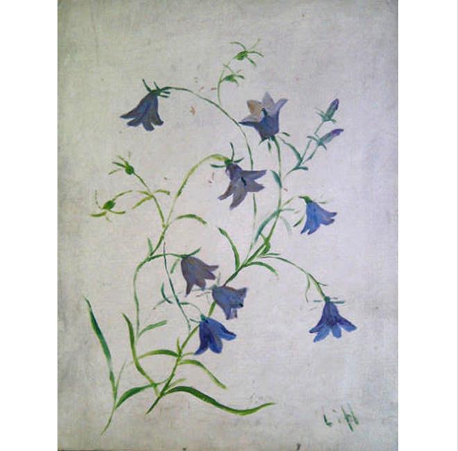 Study Bluebells <span>DAPHNE DOLAN</span>